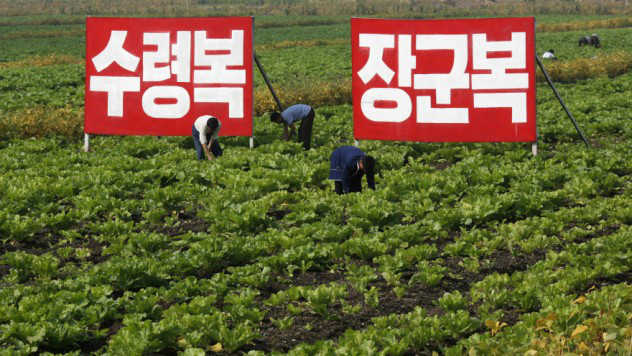 Pupuk Tinja Korea Utara